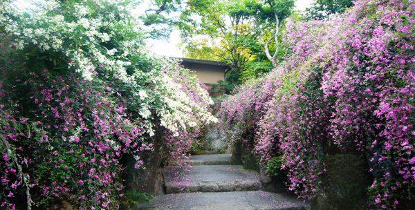 箱根美術館 萩の道